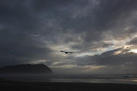 Seagulls over the beach